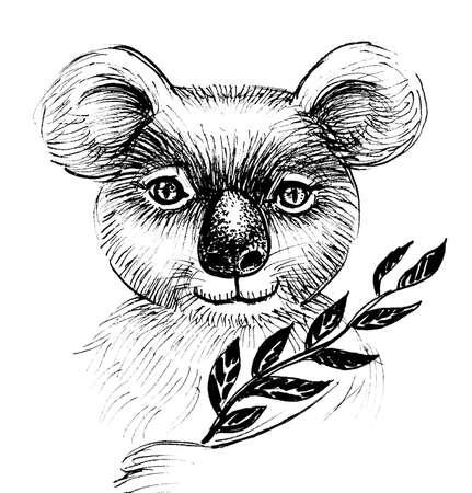 Koala animal with eucalyptus tree branch. Ink black and white drawing