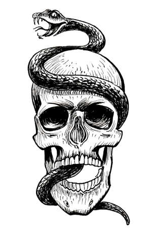 Human skull and snake. Ink black and white drawing