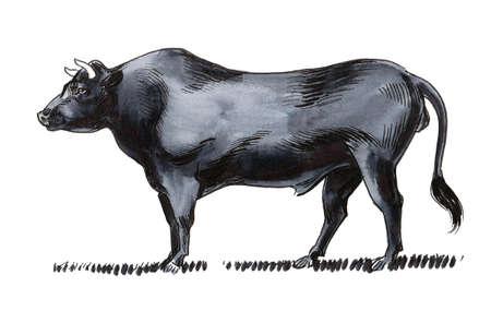 Big black bull. Ink and watercolor drawing 免版税图像