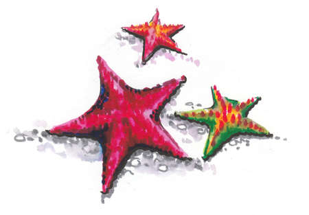 Three starfishes. Ink and watercolor drawing