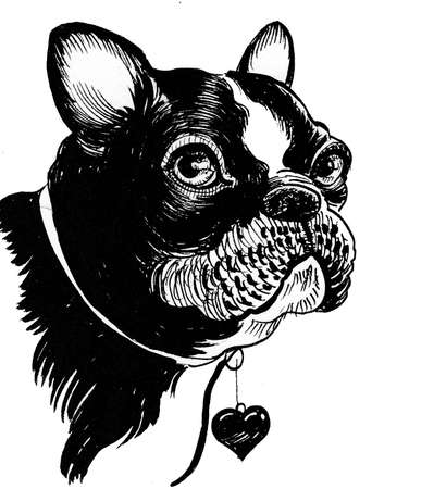 Bull dog puppy head. Ink black and white drawing