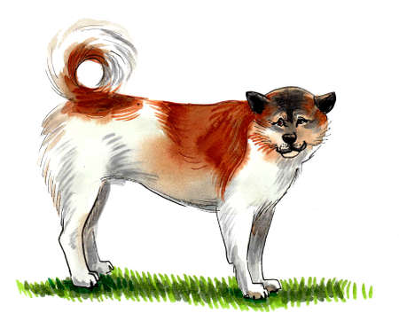 Big fluffy dog standing on green grass. Ink and watercolor drawing
