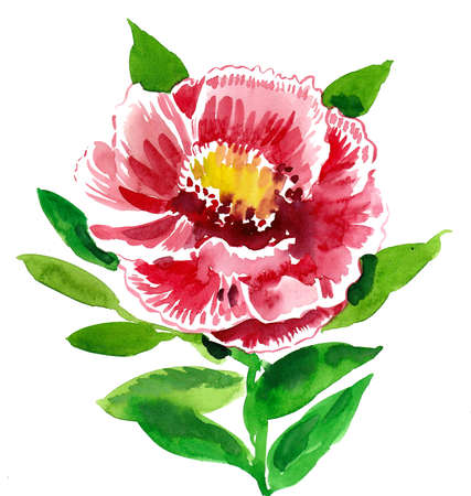 Red peony flower on white background. Watercolor painting