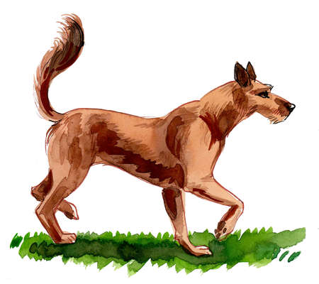 Dog walking on green grass. Ink and watercolor drawing Stockfoto