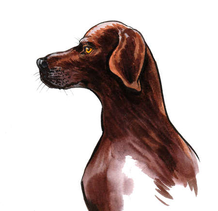 Hunting dog head. Ink and watercolor drawing