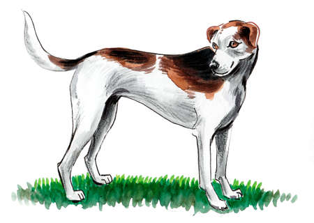 Dog standing on green grass. Ink and watercolor drawing