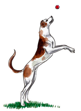 Jumping dog. Ink and watercolor drawing Stockfoto