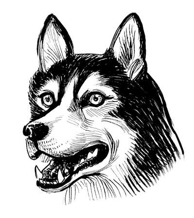 Husky dog head. Ink black and white drawing Stockfoto