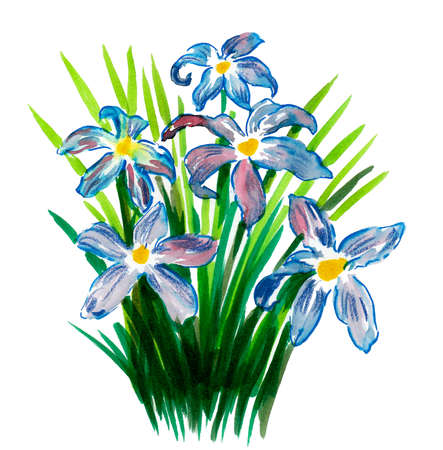 Blue flowers on white background. Watercolor painting