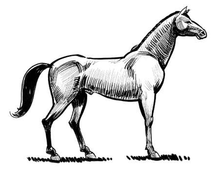 Beautiful horse. Ink black and white drawing