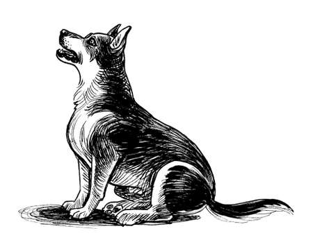 Cute sitting dog. Ink black and white drawing