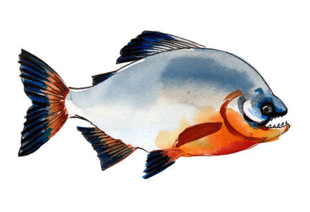 Piranha fish on white background. Ink and watercolor drawing