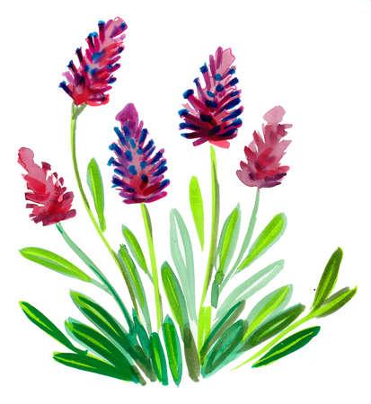 Beautiful purple flowers. Watercolor painting