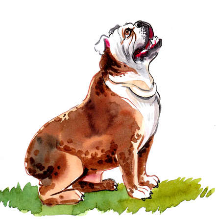 Sitting bulldog puppy. Ink and watercolor drawing Imagens