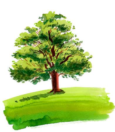 Big oak tree in the green field. Ink and watercolor drawing Reklamní fotografie