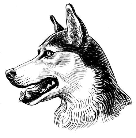 Husky dog head. Ink black and white drawing Imagens