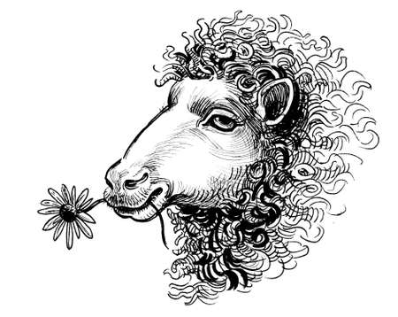 Sheep eating a flower. Ink black and white drawing