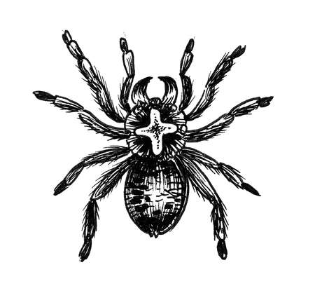 Big poisonous spider. Ink black and white drawing