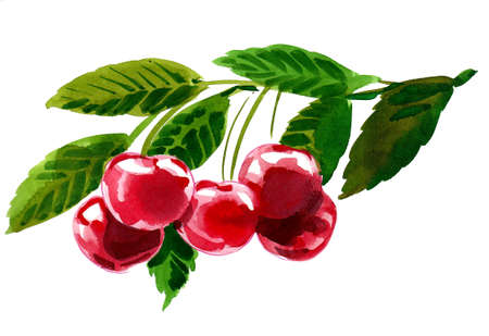 Cherry fruits on tree. Ink and watercolor drawing Stock Photo