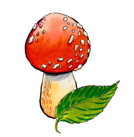 Poisonous red fly agaric mushroom and green leaf. Ink and watercolor drawing Banque d'images