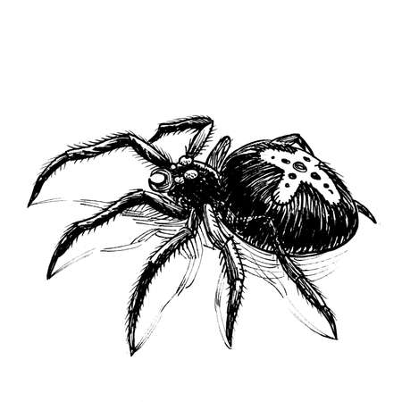 Big scary spider. Ink black and white drawing