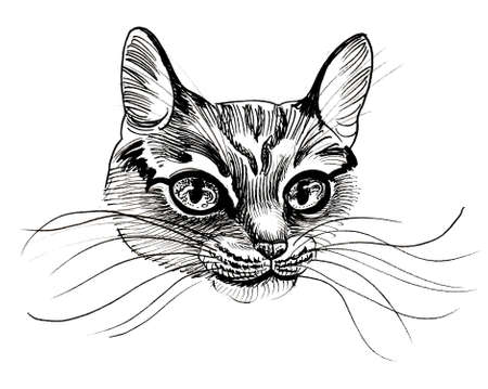 Cute cat head. Ink black and white drawing