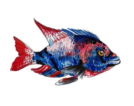 Colorful tropical fish on white background. Ink and watercolor drawing Banque d'images