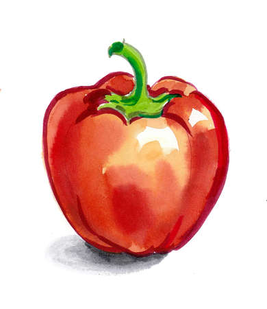 Red sweet pepper on white background. Watercolor drawing