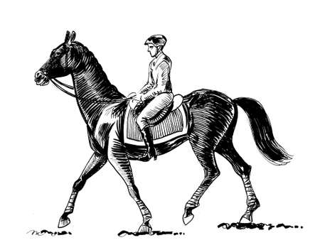 Jockey riding a horse. Ink black and white drawing