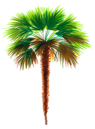 Watercolor palm tree on white background