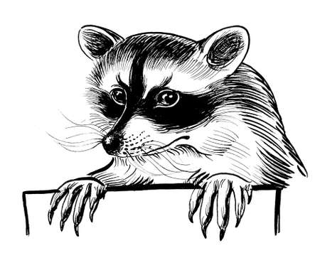Cure raccoon holding blank sheet of paper. Ink black and white drawing