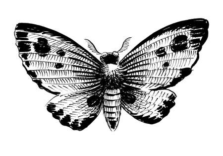 Flying moth. Ink black and white drawing Banque d'images