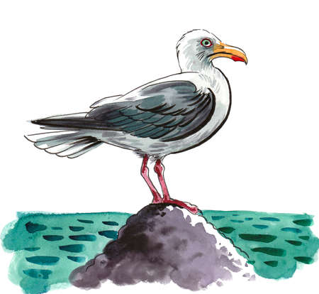 Seagull bird sitting on a rock. Ink and watercolor drawing