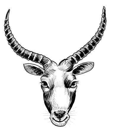 African antelope head. ink black and white drawing
