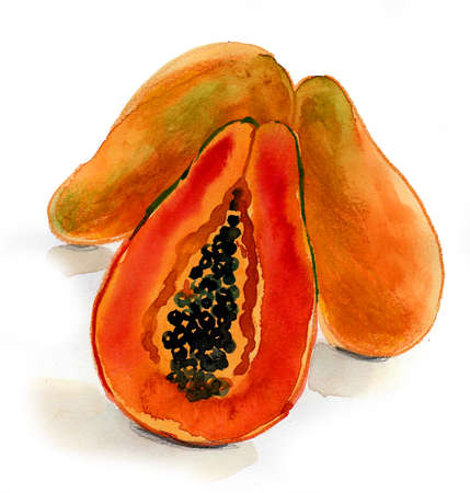 Papaya fruit on white background. Ink and watercolor drawing Stockfoto