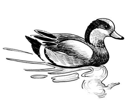 Swimming duck bird. Ink black and white drawing