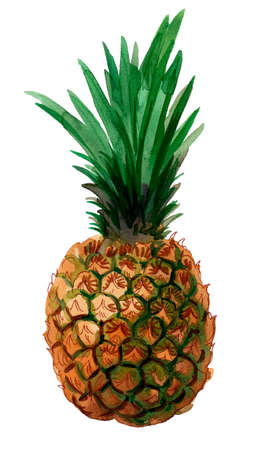Pineapple fruit on white background. Ink and watercolor drawing Stockfoto