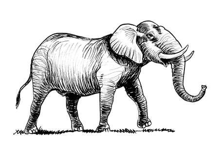 Walking elephant. Ink black and white drawing Stockfoto