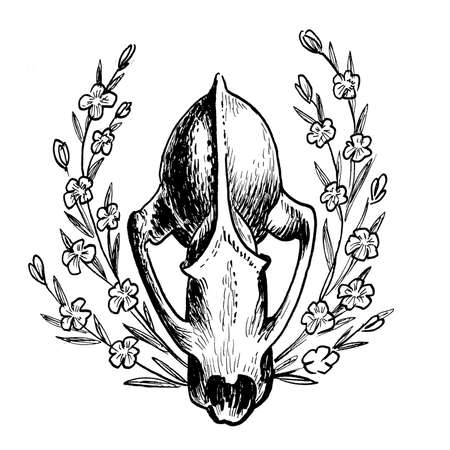 Animal skull and wild flowers. Ink black and white drawing Banco de Imagens