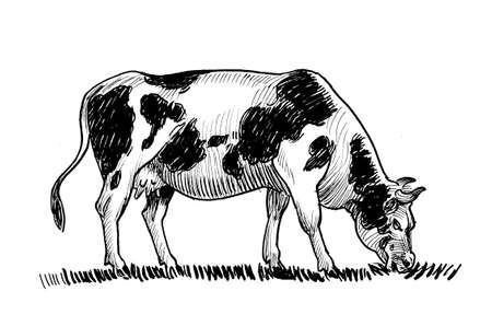 Grazing milk cow. Ink black and white drawing
