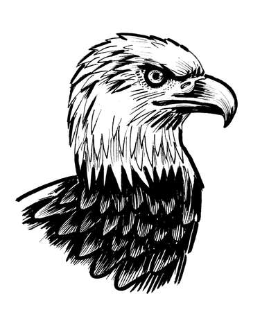 Bald eagle bird. Ink black and white drawing