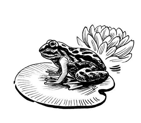 Frog and water lily flower. Ink black and white drawing Banco de Imagens