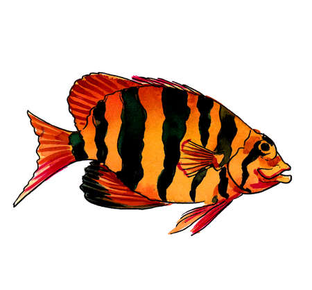 Colorful tropical orange fish with black stripes. Ink and watercolor drawing Banco de Imagens