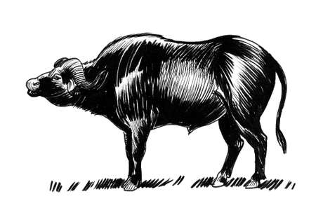 Big strong buffalo bull. Ink black and white drawing Banco de Imagens