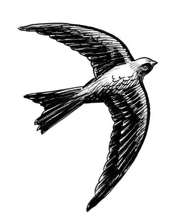 Flying swallow bird. Ink black and white drawing