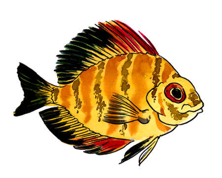 Tropical coral fish on white background. Ink and watercolor drawing Banco de Imagens
