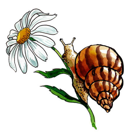 Snail on flower. Ink and watercolor drawing Banco de Imagens