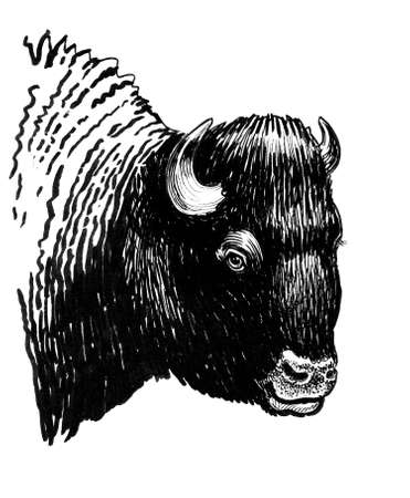 Bison bull head. Ink black and white drawing Banco de Imagens