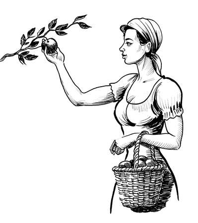 Female farmer worker picking apple fruits from the tree. Ink black and white drawing