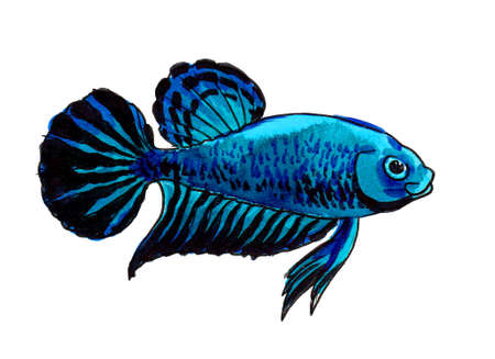 Blue fish on white background. Ink and watercolor drawing